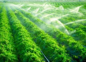 الإمارات تدعم إيجاد «مخزون إستراتيجي عربي للأغذية» لمواجهة أزمة الغذاء العالمية
