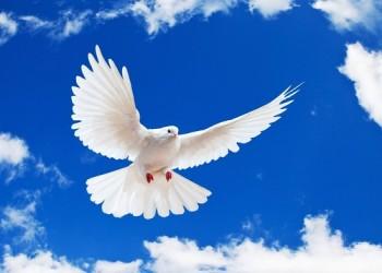حب الله ورسالة السلام المذهبي