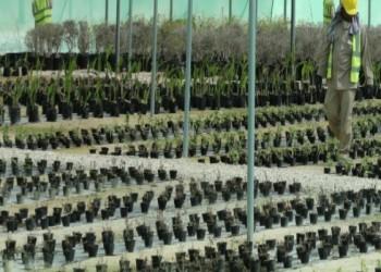 «مشروع المشتل».. خطة بيئية لقطر في مونديال 2022