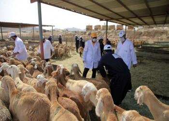 إخضاع الأضاحي في السعودية لضريبة القيمة المضافة بنسبة 5%