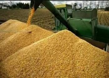 الجزائر تتجه لاستيراد القمح الروسي وسط مخاوف فرنسية