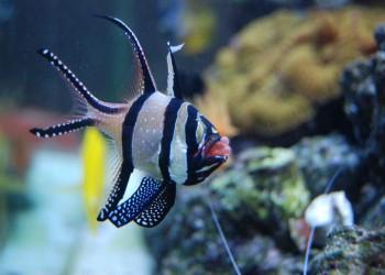 تغيرات المناخ تقود أسماك البحر الأحمر إلى تركيا