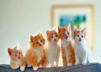 استشاري نساء وتوليد: القطط بريئة من «عقم المرأة»