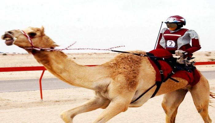 """راكب الجمال الآلي.. اختراع قطري في موسوعة """"غينيس"""""""