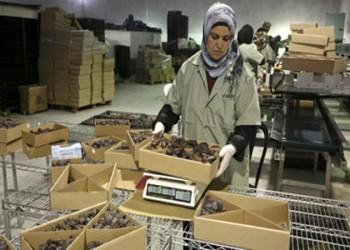 قطاع النخيل الفلسطيني يواجه خطرا كبيرا بسبب شح المياه