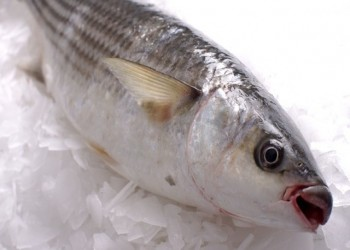 تركيا تصدر 300 طن من سمك البوري لمصر وسوريا سنويا