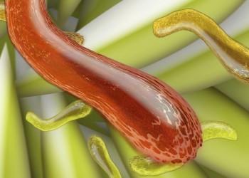 اكتشاف ألفي نوع جديد من البكتيريا في أمعاء الإنسان
