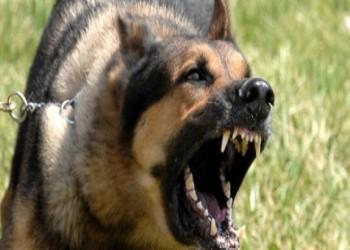 سعودية تفقد جنينها بسبب «كلبين بوليسيين» في منتجع بجدة