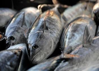 قطر تطلق أول مشروع استزراع سمكي لتحقيق الاكتفاء الذاتي