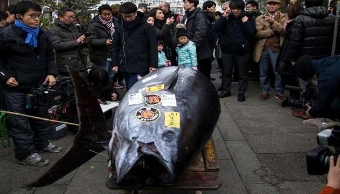 بيع سمكة ضخمة بأكثر من 300 ألف دولار في اليابان