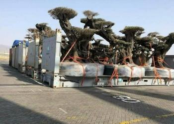 ميناء صلالة ينفي نقل أشجار من «سقطرى» للإمارات