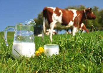 الحليب ومشتقاته لا تلعب دورا في إصابة الأطفال بالسمنة