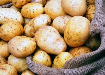 روسيا ترفع حظر استيراد البطاطس المصرية من 8 مناطق