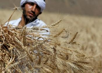 مصر تواجه خطر نقص استيراد القمح بسبب بنك هولندي