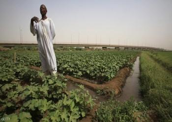 السودان.. سلة غذاء العرب الجائعة