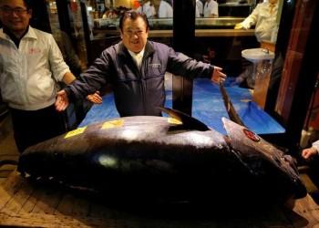 اليابان.. بيع سمكة تونة بـ3.1 مليون دولار