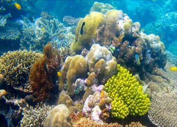 تدمير 75% من الشعاب المرجانية بالإمارات بسبب درجات الحرارة
