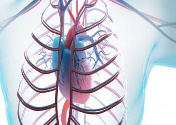 مكة.. أول مدينة سعودية تشارك بمبادرة عالمية لصحة القلب