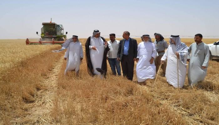 العراق يحقق للمرة الأولى الاكتفاء الذاتي من الحنطة