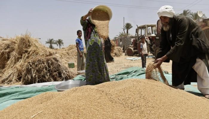 بعد الانفجار الروسي.. فحص مصري لشحنات القمح