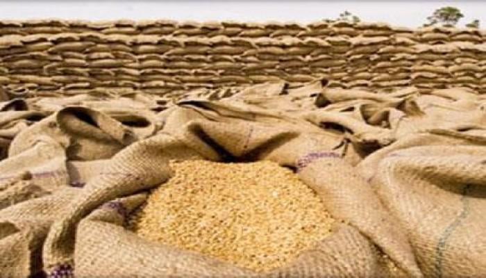 الزراعة المصرية تعيد شحنة قمح مصابة للولايات المتحدة