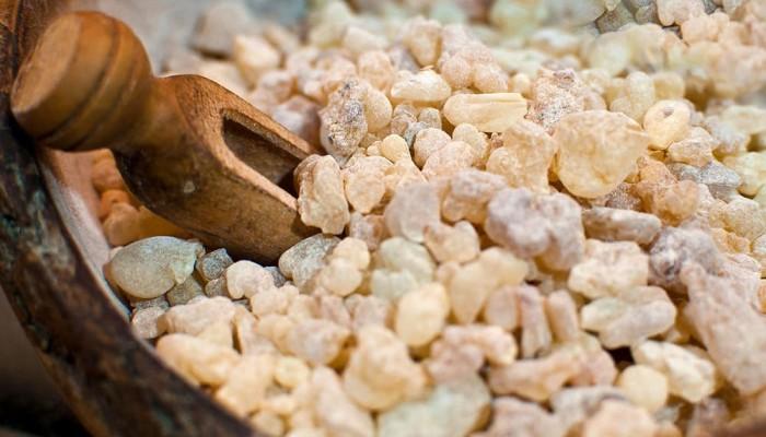 BBC: اللبان العماني.. سر الشفاء الأغلى من الذهب