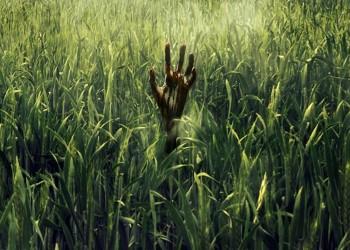 في العشب الطويل.. فيلم رعب جديد لستيفن كينج