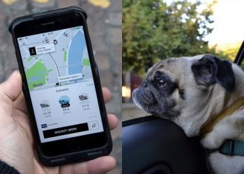 خدمة جديدة من أوبر تتيح اصطحاب حيوانك الأليف بحرية