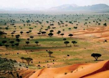 السعودية تبدأ حملة للتشجير بأكثر من 50 ألف شجرة