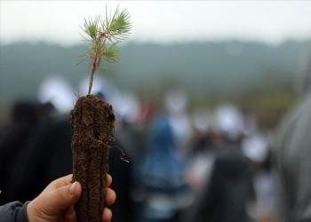 الولايات التركية تشهد زرع 11 مليون غرسة الإثنين