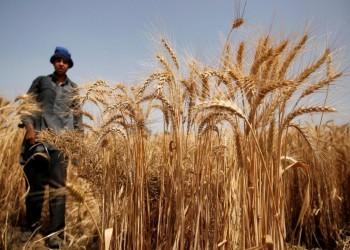 مصر: احتياطي القمح يكفي 5 أشهر