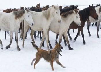مشروع قانون ببرلمان تركيا يشدد عقوبات منتهكي حقوق الحيوان