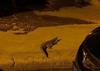 تمساح يثير الذعر في أحد شوارع مصر (صور)