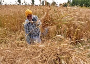 مصر تدرس إضافة القمح الهندي لقائمة مناشئ التوريد المقبولة