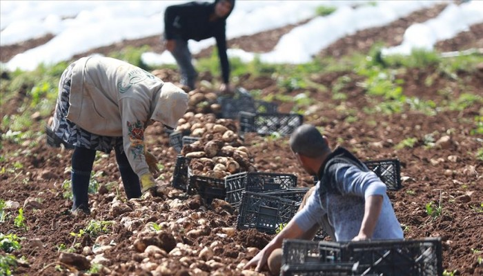 بعد منع التصدير... إسرائيل تضرب الزراعة الفلسطينية في مقتل