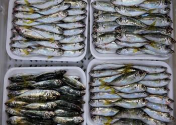 17 مليون دولار صادرات أسماك تركية إلى روسيا