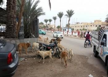 عضة كلب تغرم الحكومة المصرية 7 آلاف دولار