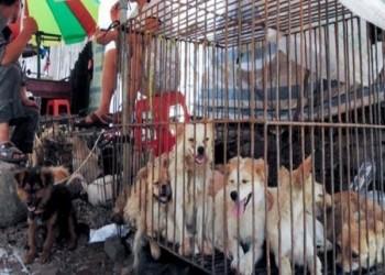 بسبب كورونا.. شينزين أول مدينة صينية تحظر أكل القطط والكلاب