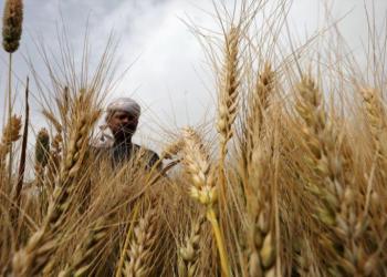 تضارب حكومي حول احتياطيات مصر من القمح وسط تهديد كورونا