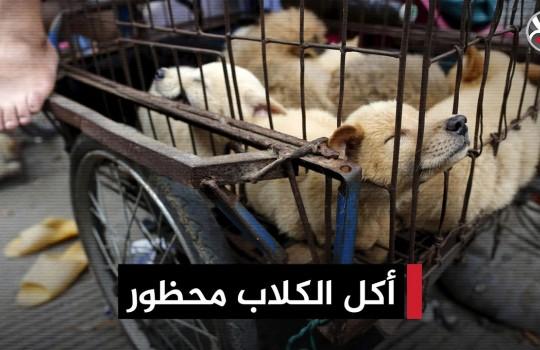 أخيرًا.. قانون يجرم أكل الكلاب والقطط في الصين