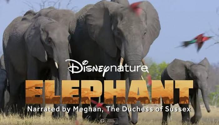 ميجان ماركل تعود للتمثيل في فيلم الفيل على ديزني +
