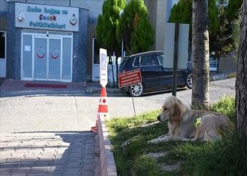 """""""وفاء كلب""""..ينتظر صاحبه التركي المريض أمام المستشفى منذ 5 أيام"""