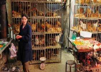 قرار جديد من الصين بشأن بيع الدواجن الحية في الأسواق