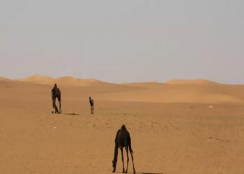 هياكل بشرية من قبل الميلاد.. اكتشاف أثري غريب في السعودية