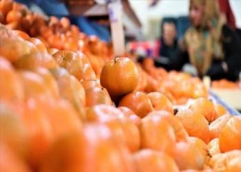 صادرات الحمضيات التركية إلى روسيا ترتفع بـ48%
