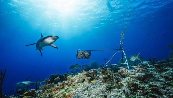 دراسة: تراجع أسماك القرش في 8 دول بينها قطر لهذا السبب