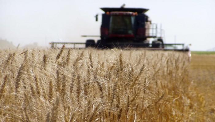 إيران تحقق الاكتفاء الذاتي في إنتاج القمح للعام الخامس تواليا