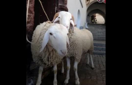 طقوس خروف العيد