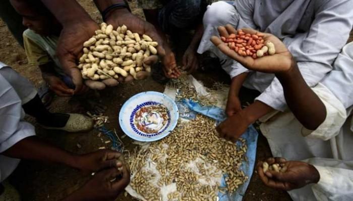 مع حظر تصديره.. السودان يعلن فقد أسواقا مهمة للفول السوداني