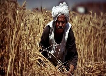 مصر تتوسع في شراء القمح كإجراء احترازي بسبب كورونا